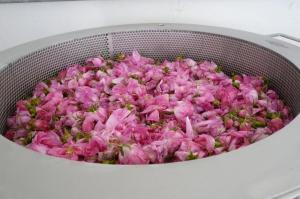 Enfleurage-roses