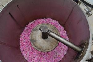Alambic-rose