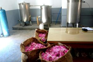 Distillation roses