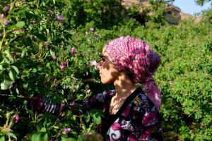 cueillete-roses