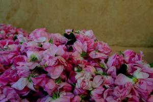 roses-maroc